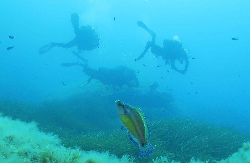 snorkel-malta-tuviajedegrupo